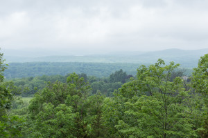 Humid vista looking into Ringwood Forest